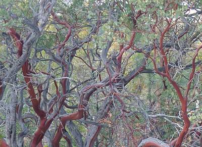 Poster featuring the photograph Idyllwild Red Tree by Nora Boghossian