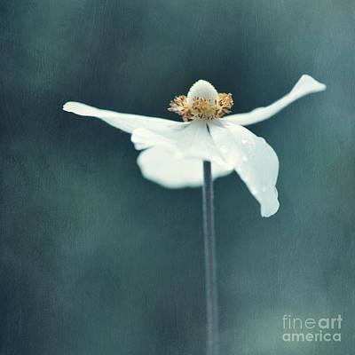 If  Petals Were Wings Poster by Priska Wettstein