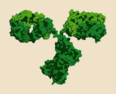 Igg2a Monoclonal Antibody Poster