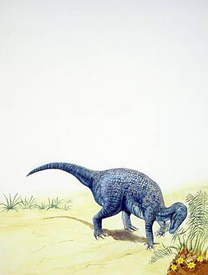 Iguanodon Dinosaur Poster