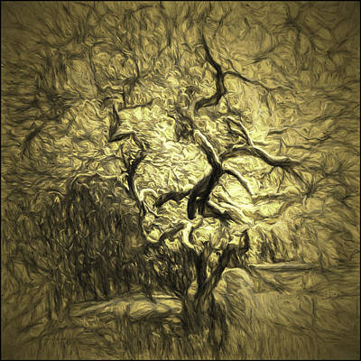 Illusion Tree Poster