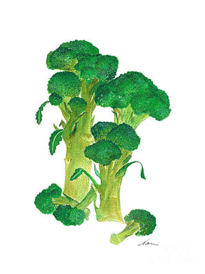 Illustration Of Broccoli Poster by Nan Wright
