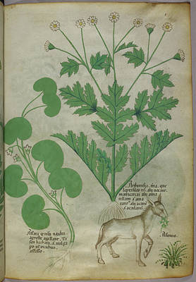 Illustration Of Plants And A Donkey Poster by British Library