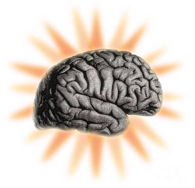 Illustration Of The Brain Poster by Dennis Potokar