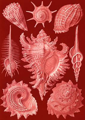Illustration Shows Aquatic And Terrestrial Snails Poster
