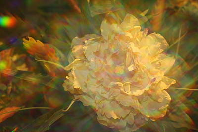 Poster featuring the photograph Impressionistic Rose by Dora Sofia Caputo Photographic Art and Design