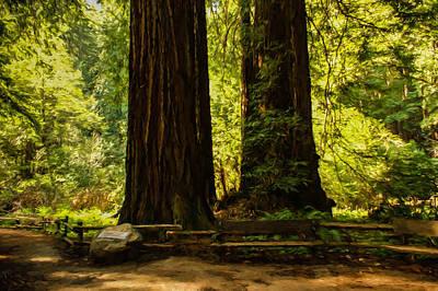 Impressions Of Muir Woods California Poster by Georgia Mizuleva