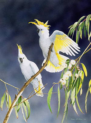 In A Shaft Of Sunlight - Sulphur-crested Cockatoos Poster