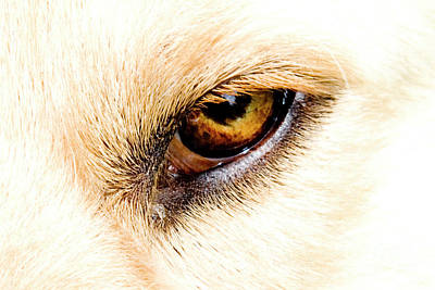 Poster featuring the photograph In The Eyes.... by Rod Wiens