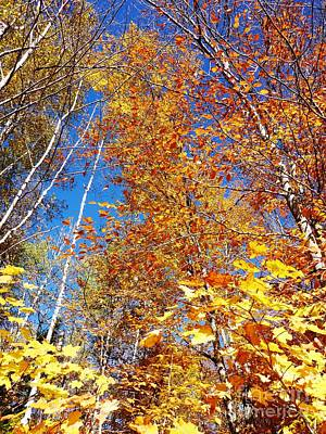 In The Forest At Fall Poster