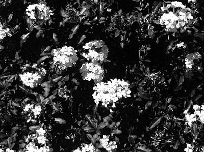Poster featuring the photograph In The Garden- Black And White by Alohi Fujimoto