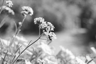 In The Meadow Poster by Barbara Bardzik