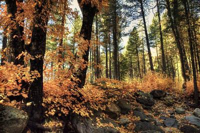 In The Woods  Poster by Saija  Lehtonen