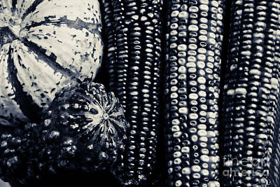 Indian Corn And Squash In Black And White Poster