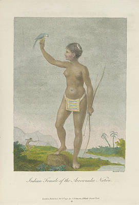 Indian Female Of The Arrowauka Nation Poster by British Library
