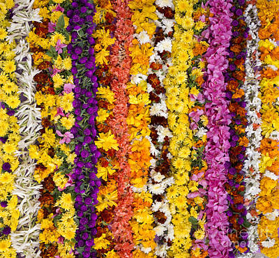 Indian Flower Garlands  Poster by Tim Gainey