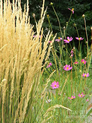 Indian Grass And Wild Flowers Poster