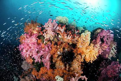 Indian Ocean, Indonesia, Papua, Raja Poster