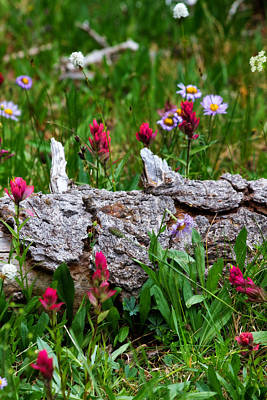 Poster featuring the photograph Indian Paintbrush by Ronda Kimbrow