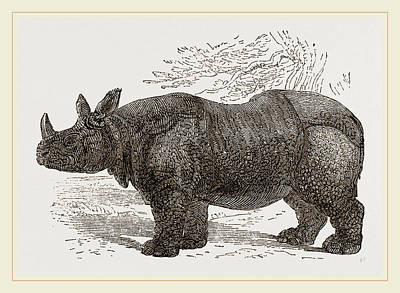 Indian Rhinoceros Poster by Litz Collection