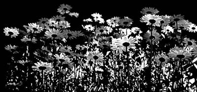 Infrared Daisies Poster by David Patterson
