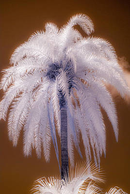 Infrared Palm Tree Poster