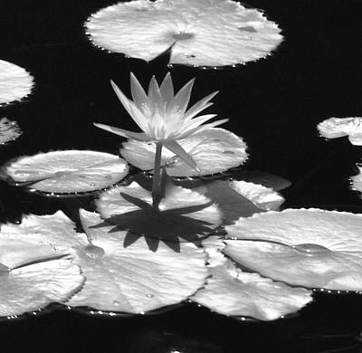 Infrared - Water Lily 02 Poster