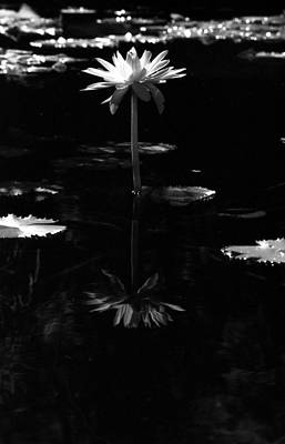 Infrared - Water Lily 03 Poster by Pamela Critchlow