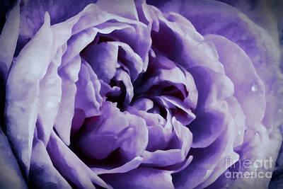 Lavender Motive Poster by Jean OKeeffe Macro Abundance Art