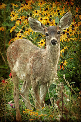 Innocent Fawn And Flowers Poster by Peggy Collins