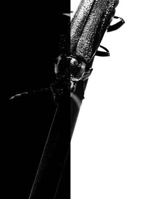 Insect In Black And White Poster