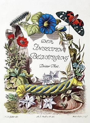 Insecten-belustigung Poster by Paul D Stewart