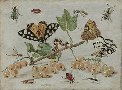 Insects And Fruit, Jan Van Kessel Poster by Litz Collection