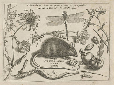 Insects, Plants And Fruits Around A Rat, Print Maker Jacob Poster by Jacob Hoefnagel And Joris Hoefnagel And Christoph Weigel