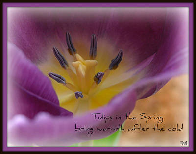Poster featuring the photograph Inside A Tulip by Heidi Manly