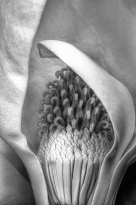 Inside The Flower Poster
