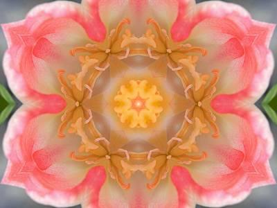 Inside Tulip Mandala Poster