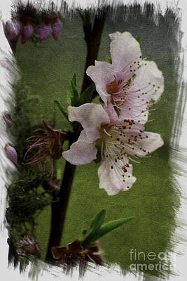 Poster featuring the photograph Into Spring Abstract by Lori Mellen-Pagliaro