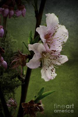 Poster featuring the photograph Into Spring by Lori Mellen-Pagliaro