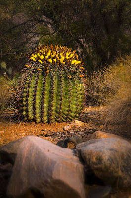 Poster featuring the photograph Into The Prickly Barrel by Mark Myhaver