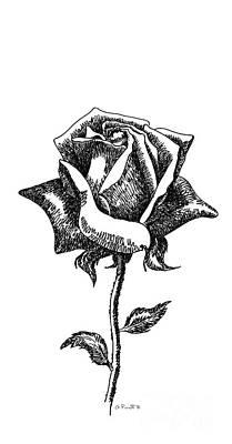 iPhone-Case-Flower-Rose1 Poster by Gordon Punt