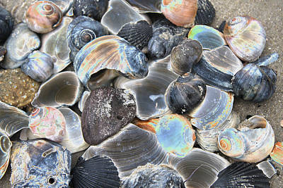 Iridescent Shells Poster by Christiane Schulze Art And Photography