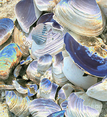 Iridescent Shells II Poster by Christiane Schulze Art And Photography