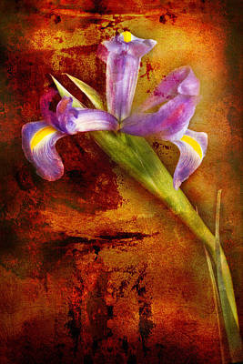 Poster featuring the photograph Iris Art by Bob Coates