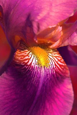 Iris Flower Fuchsia Pink Poster by Jennie Marie Schell