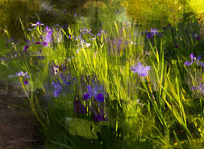 Poster featuring the photograph Iris Garden  by Linde Townsend