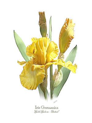 Iris Germanica Gold Galore Poster by Artellus Artworks