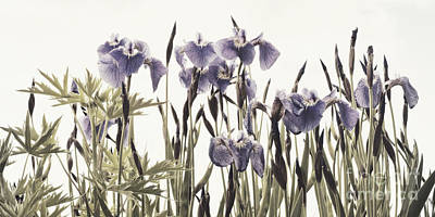 Iris In The Park Poster by Priska Wettstein