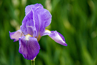 Poster featuring the photograph Iris by Lana Trussell