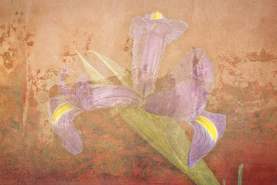 Poster featuring the photograph Iris Number Four by Bob Coates